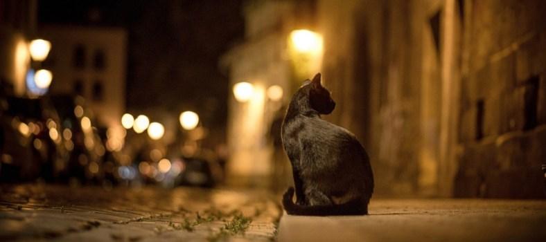 Chat la nuit