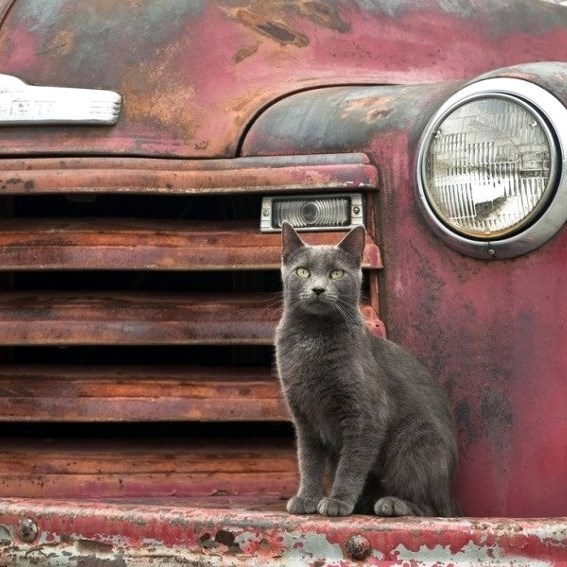 Chat sur une épave de voiture